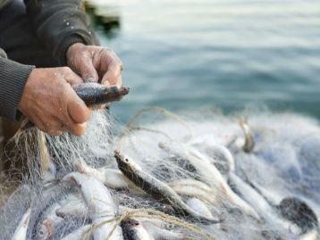 Fondo Europeo per gli Affari Marittimi e la Pesca (FEAMP): bando 2021 - Misura 5.69