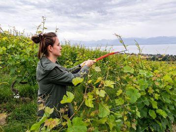 PSR 2014-2020 (FEASR): Formazione e acquisizione di competenze - addetti al settore agricolo